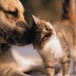 In America battuto ogni record di spesa per cani e gatti