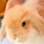 Nuove frontiere della psichiatria: gli animali domestici possono fare molto