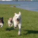 Cane smarrito e ritrovato: se lo vuoi paghi il riscatto