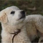 Storie di fedeltà: il cane che fa visita alla tomba del padrone