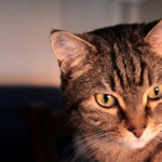 È giusto far sterilizzare o castrare il gatto?
