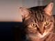 gatto-sterilizzazione