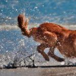 Le spiagge per cani nelle Marche