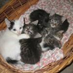 Animali domestici in regalo: gattini, golden retriever, cuccioli di labrador e pastore tedesco
