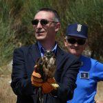 Rapaci: una poiana, un gheppio ed un falco pellegrino liberati a Cosenza