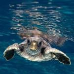 Anche le tartarughe sono vittime di abbandono. Il parere dell'esperto.