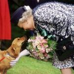 La regina Elisabetta piange la morte del suo amato cane Monty