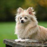 Truffa dei cuccioli di razza in regalo: il racconto di una vittima del raggiro