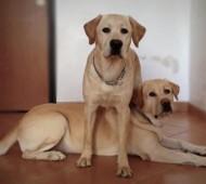 comando-lascia-cane