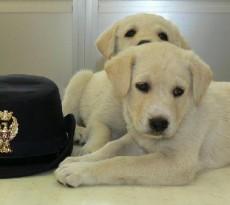 cuccioli-polizia