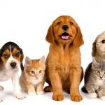Come creare un album con le foto e i video più belli dei tuoi animali domestici