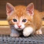 Gattino: come prepararsi al suo arrivo in casa