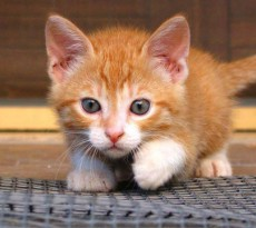 gattino-nutrizione