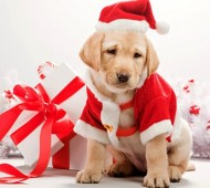 cucciolo-cane-regalo-natale-2