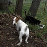 Pelle e pelo del cane, come trattarli e come curarli