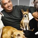 Striscia la Notizia: video shock sui metodi di addestramento di cani usati da César Millan