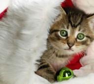 gatto-calza-befana