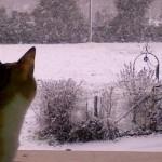 Gatti di casa e colonie feline: come proteggerli dal freddo