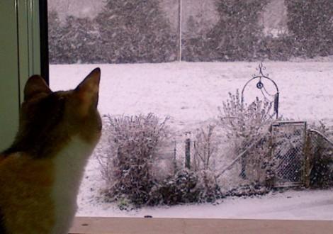 gatto-neve-copertina