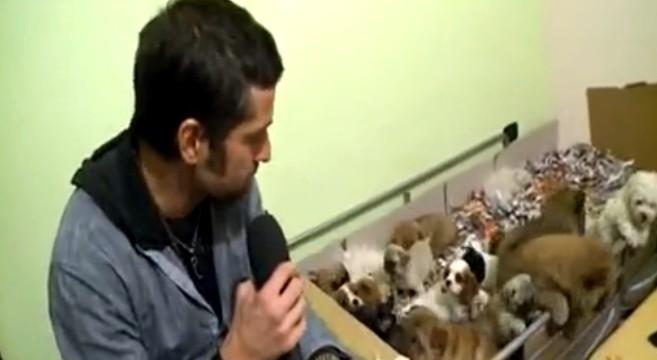 edoardo-stoppa-cuccioli-sequestrati
