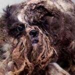 Foto storia della straordinaria trasformazione di un cane randagio salvato