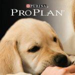 PRO PLAN CUP 2013 con ENCI: la manifestazione cinofila dei cuccioli di razza più belli