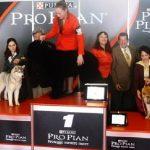 PRO PLAN Cup 2013: foto e video dei cuccioli di razza vincitori della tappa di Ferrara