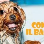 Sondaggio Friskies: consigli sul lavaggio di cane e gatto e risultati della ricerca