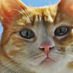 Annunci di adozione cane boxer gattini neri e cuccioli for Sito annunci regalo