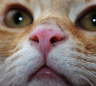 gatto-vibrisse