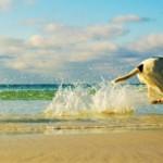 Spiagge per cani e stabilimenti balneari pet friendly nelle regioni italiane