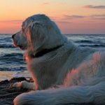 Le spiagge per cani in Abruzzo