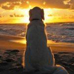 Le spiagge per cani in Calabria