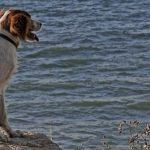 Le spiagge per cani in Emilia Romagna
