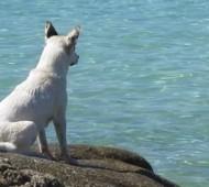 spiaggia-cani-campania