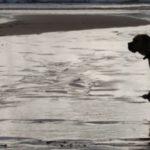 Le spiagge per cani nel Veneto
