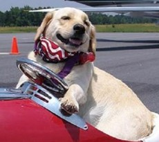 aereo-cane-gatto