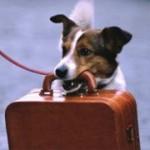 Vacanze 2013: le regole per viaggiare con cane e gatto
