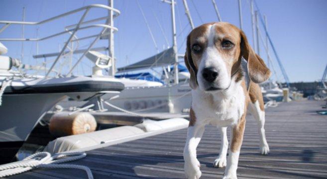 nave-cane-gatto