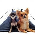 Vacanza con il cane: consigli per il campeggio