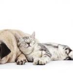 Amanti dei cani e dei gatti: scoprite la vostra personalità