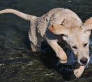 cane-nuotare-addestramento