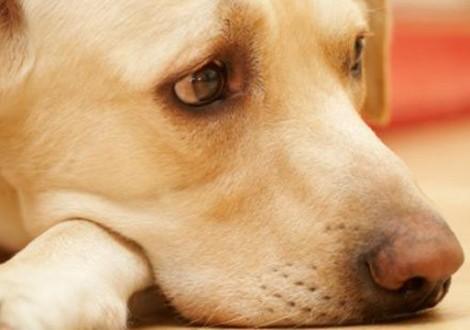 cane-smarrito-trovato