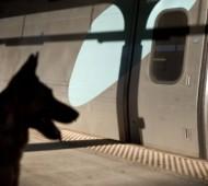 treno-cane-gatto