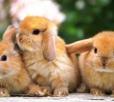 Conigli nani un mondo da scoprire petpassion blog - Lettiera coniglio nano ...