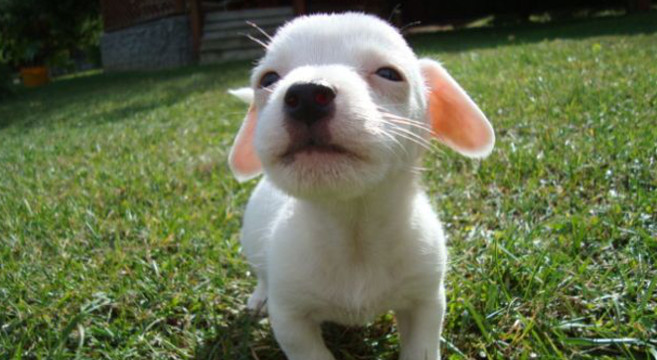 Razze di cani di piccola taglia divise per carattere for Marsupio per cani di piccola taglia