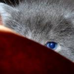 Test per conoscere meglio il carattere del tuo gatto