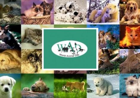giornata-mondiale-degli-animali