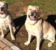 seduto-comando-addestramento-cane