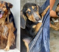 adozione-cani
